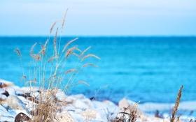 Картинка море, небо, трава, макро, снег, растение