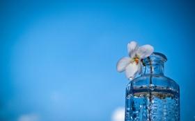 Картинка цветок, макро, фон, бутылка