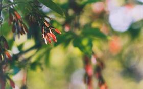 Обои листья, солнце, фото, обои, картинка, природы, боке
