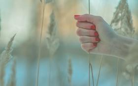 Картинка зима, трава, колос, Рука