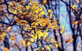 Картинка осень, листва, боке, филиалы