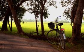 Картинка поле, дорога, bike