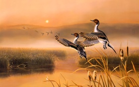 Обои осень, восход, озеро, раннее утро, птицы, утки, живопись