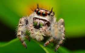 Картинка лист, насекомое, боке, паучок