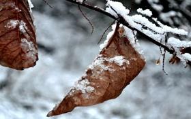 Обои зима, листья, макро, природа, фото, зимние фотографии