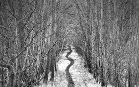 Обои лес, ч/б, тропинка, by Robin de Blanche, Alley