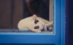 Картинка кошка, кот, отдых, окно