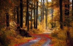 Картинка осень, лес, тропинка