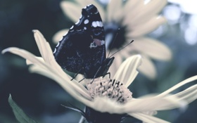 Картинка цветок, бабочка, крылья, лепестки, насекомое
