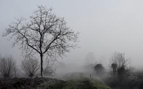 Обои природа, утро, туман, дерево