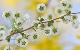 Картинка макро, цветы, ветка, лепестки