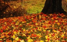 Обои осень, листья, дерево
