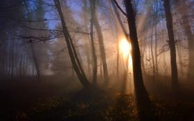 Картинка лес, пейзаж, туман, утро