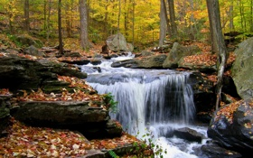 Картинка осень, лес, листья, камни, водопад