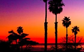 Обои закат, небо, зарево, силуэт, пальмы, море