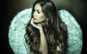 Картинка sexy, wings, feathers, angel