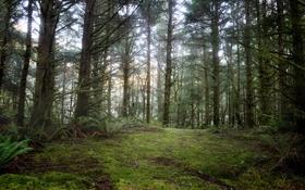 Картинка лес, национальный парк, Fort Stevens, Орегонское побережье