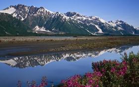 Картинка пейзаж, цветы, горы, река, камни, берег, Природа