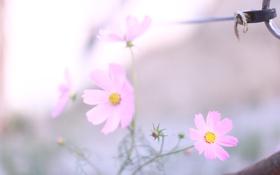 Картинка макро, свет, цветы, легкость, растения, весна, размытость
