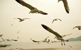 Обои животные, пейзаж, птицы, фото, обои, полёт