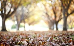 Картинка листья, макро, парк