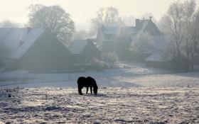 Обои зима, снег, конь, дома