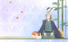 Картинка кот, рисунок, подсолнух, листья, natsume yuujinchou, natsume takashi, бамбук