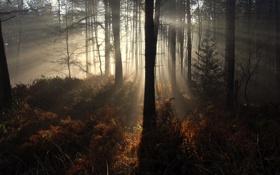 Обои лучи, свет, природа, утро, дес