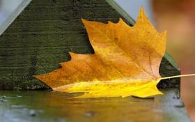 Картинка мокро, осень, листья, скамейка, фото, дождь, влага