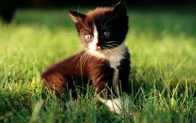 Обои кот, трава, черный, котенок, белый, cat, макро