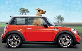 Обои дорога, красный, пальмы, ветер, скорость, собака, очки