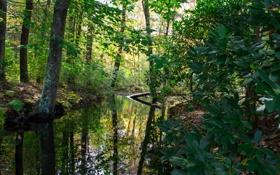 Картинка лес, листья, вода, деревья, ручей, речка