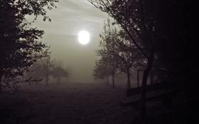 Обои солнце, свет, деревья, скамейка, туман, искажение, сад