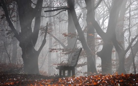 Обои деревья, туман, скамейка