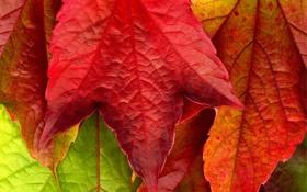 Обои осень, макро, красный, жёлтый, фото, красивые обои, осенние обои