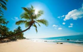 Обои камни, небо, облака, океан, песок, пляж, Пальмы