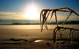 Обои пейзаж, солнуе, горизонт, иней, зима, снег, ветка