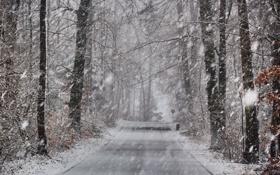 Обои зима, дорога, снег