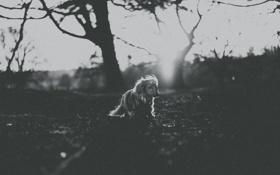 Обои ветки, деревья, солнце, поле, силуэт, собака