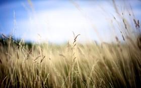 Картинка эффект, травинки, небо, травы, поле, размытость