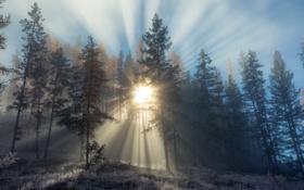 Обои зима, лес, деревья, утро, Canada, British Columbia