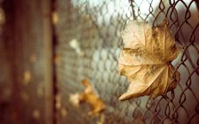 Картинка осень, листья, макро, сетка, забор, боке