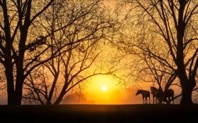 Обои закат, природа, кони