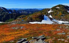 Обои лед, снег, горы, камни, холмы, вид, растения