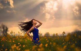Обои поле, девушка, цветы, солнечные лучи