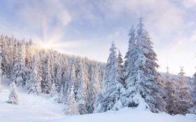 Обои зима, лес, солнце, снег, рассвет, ёлки, сопки