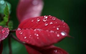 Картинка листья, природа, роса