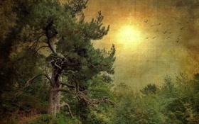 Картинка лес, дерево, текстура