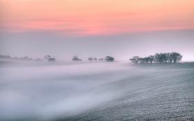 Картинка деревья, природа, туман, поля, весна, утро, Великобритания