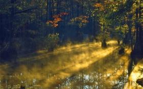 Обои лес, свет, пруд